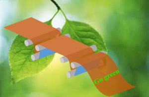 Green OVP
